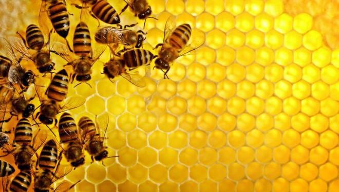 Stres, Van'daki arıları vurdu! Bal üretimi durdu!