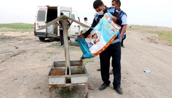 Erciş'te kısıtlamada sokak hayvanlarını beslediler