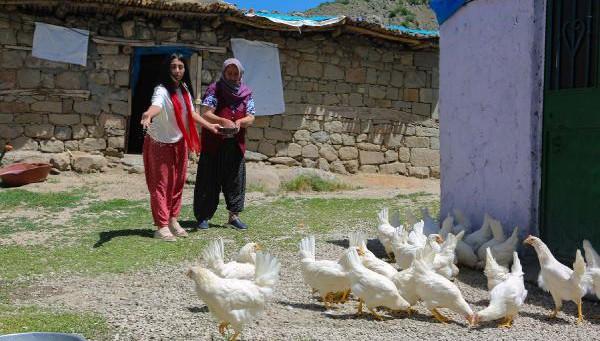 Köy köy gezip canlı tavuk dağıttılar