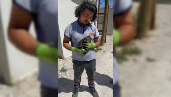Konteynerde sıkışan yavru kedi itfaiye ekipleri tarafından kurtarıldı