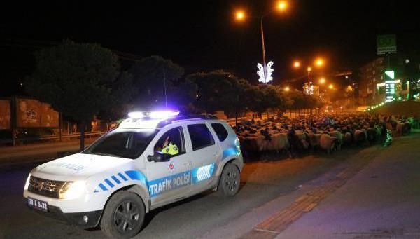 Hakkari-Van Yolunda Polis Eskortluğunda 10 Bin Koyun Geçişi