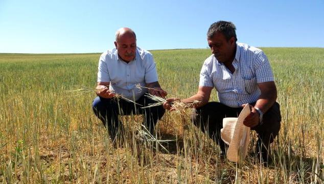 Başkan Özgökçe: Van'daki Kuraklık Çiftçileri Vurdu!