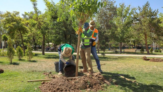 İpekyolu Belediyesinden ağaçlandırma çalışması
