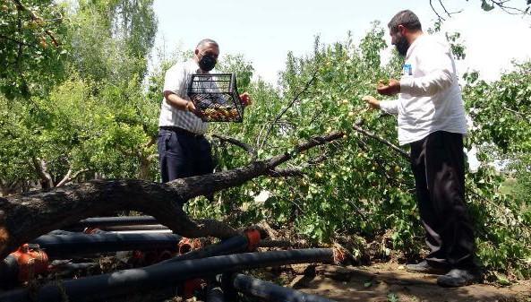 Erciş'teki taşkında 15 küçükbaş hayvan öldü, meyve ağaçları zarar gördü