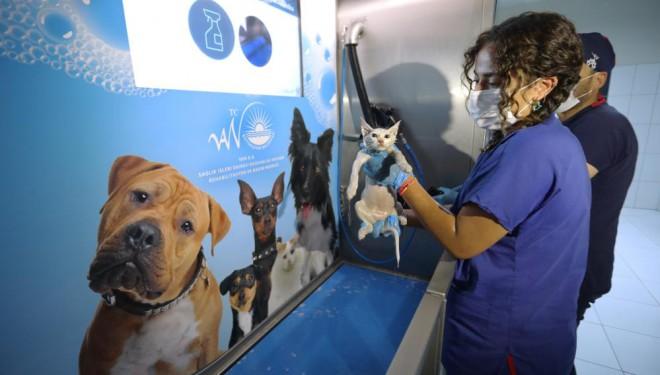 Van Büyükşehir Belediyesi, 6 ayda 147 sokak hayvanını sahiplendirdi