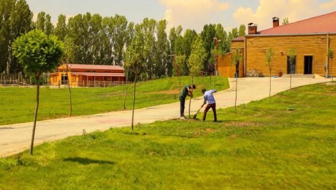 Gürpınar Belediyesinin ağaç seferberliği devam ediyor