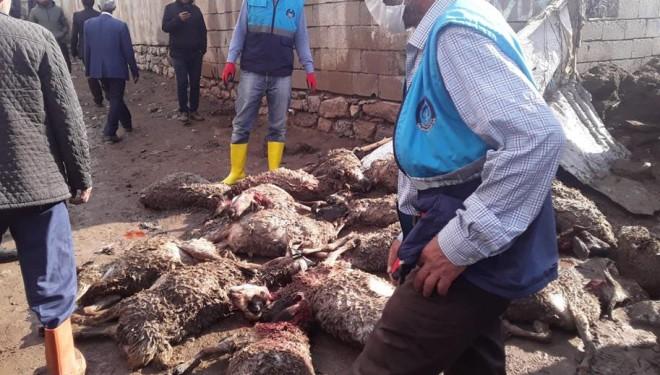 Çaldıran'da sel felaketi, onlarca hayvan telef oldu