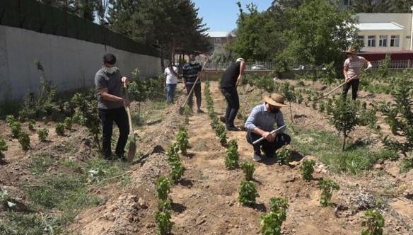 Endemik Erciş üzümü gelecek nesiller için toprakla buluşturuldu
