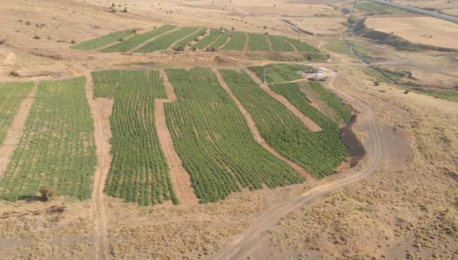 150 dönüm üzerine kurdukları tarladan bölgeye meyve ve sebze gönderiyorlar