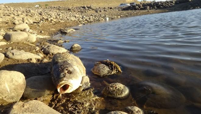 Van'daki balık ölümlerinin nedeni