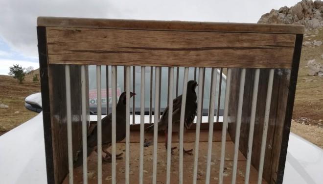 Van'da kafes avcılığı yapan