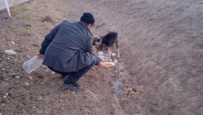 Van'da vefalı köpek, yol kenarında vefasız sahibini bekliyor!
