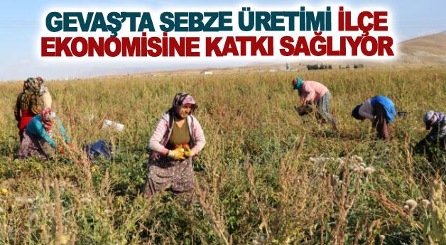 Gevaş'ta sebze üretimi ilçe ekonomisine katkı sağlıyor