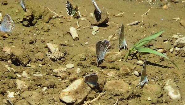 Van kelebekçilerin mekanı oldu (VİDEO)