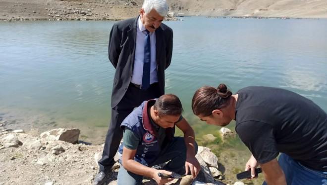 Van'da korkutan balık ölümlerinin nedeni belli oldu