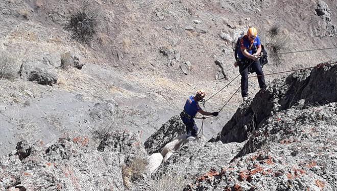 Kayalıklarda mahsur kalan koyunlar AFAD tarafından kurtarıldı