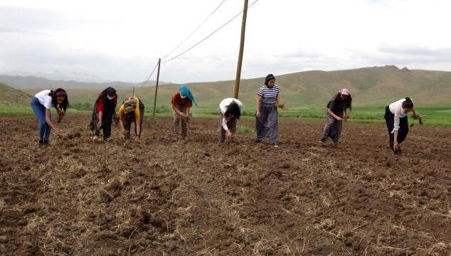 Yüksekovalı kadınlardan tarım seferberliği